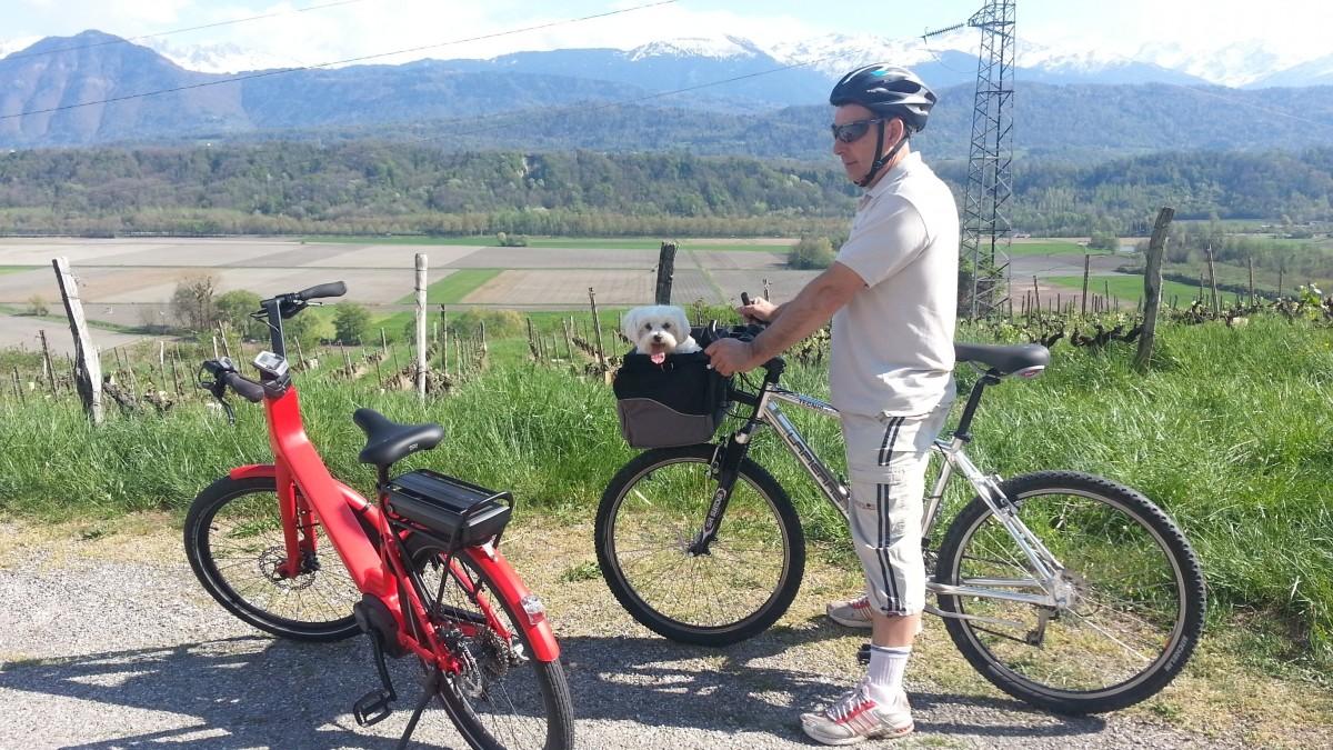Cesta de bicicleta para perro front box de luxe - Cestas para bicicletas ...
