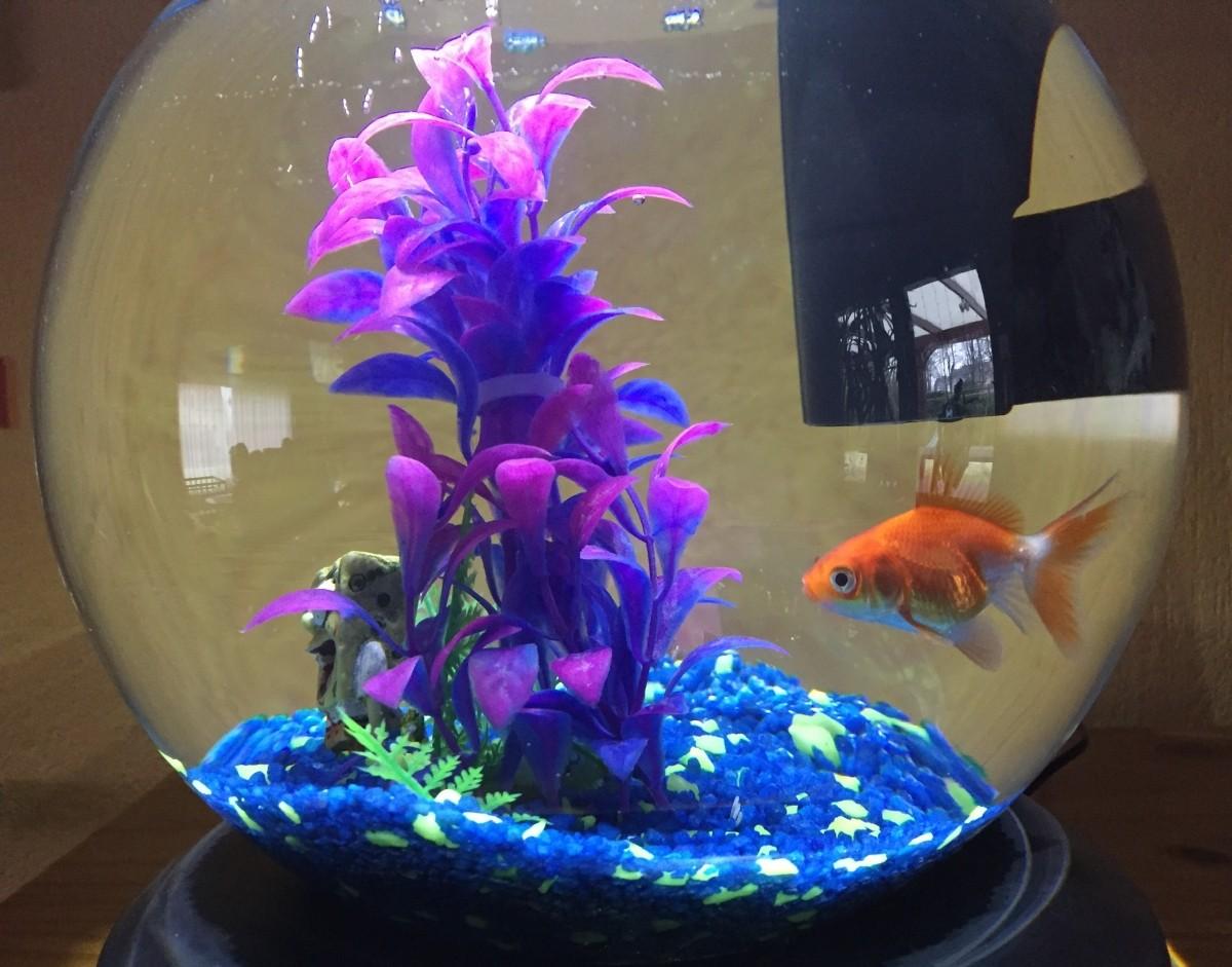 Tetra cascade globe 6 8l acuario y mobiliario for Aquarium poisson rouge boule