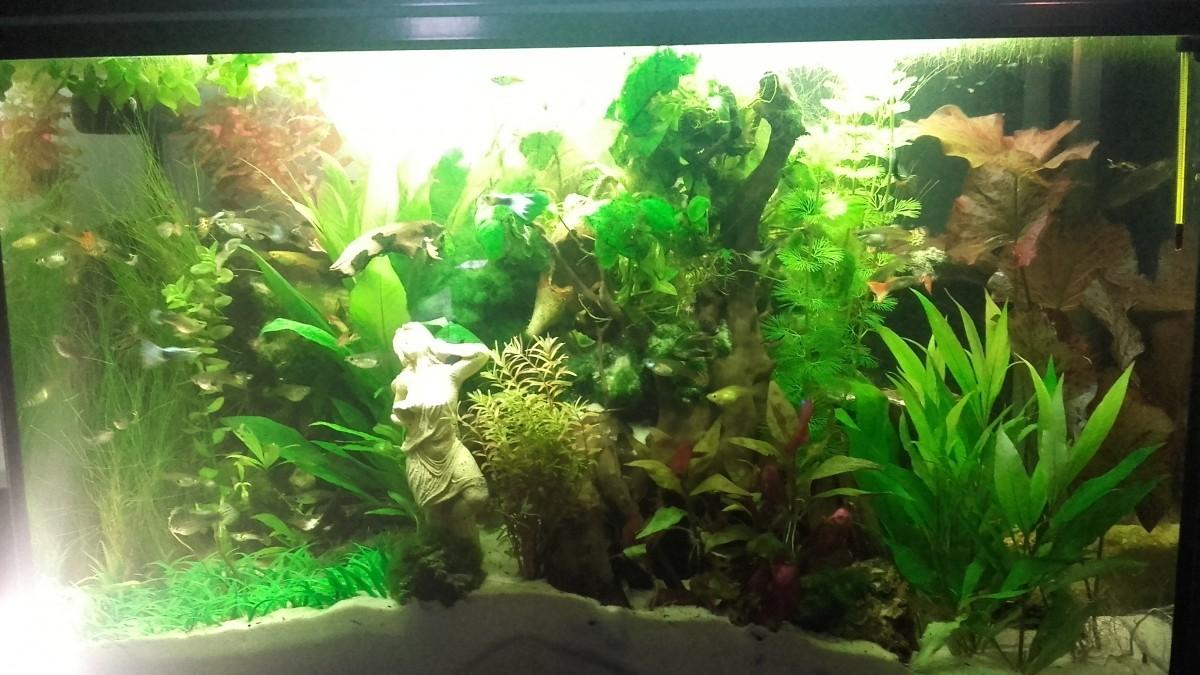 plant mat 3 planta artificial para acuario plantas