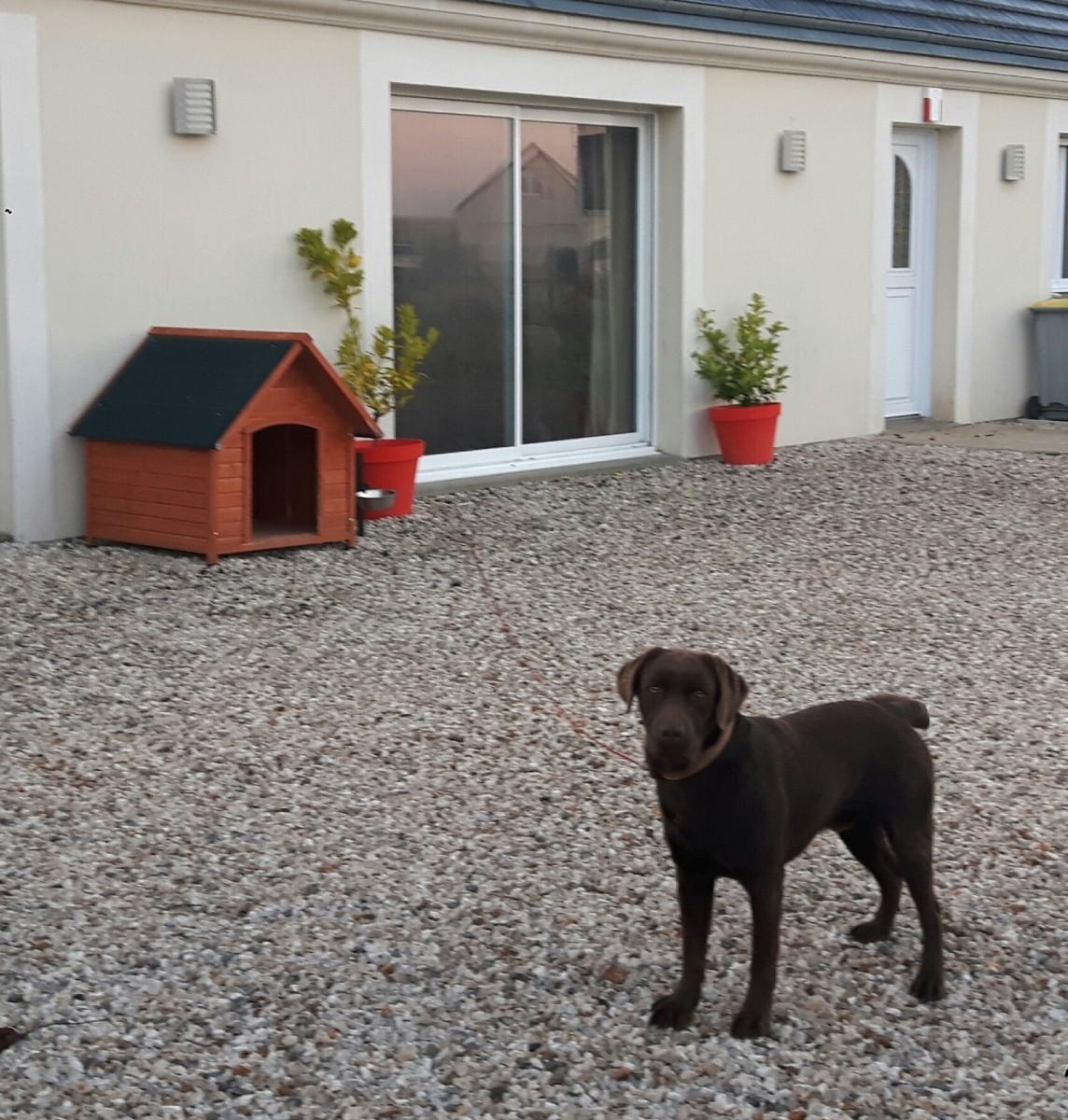 Caseta para perro con techo a dos aguas toutou casetas for Niche exterieure pour chien