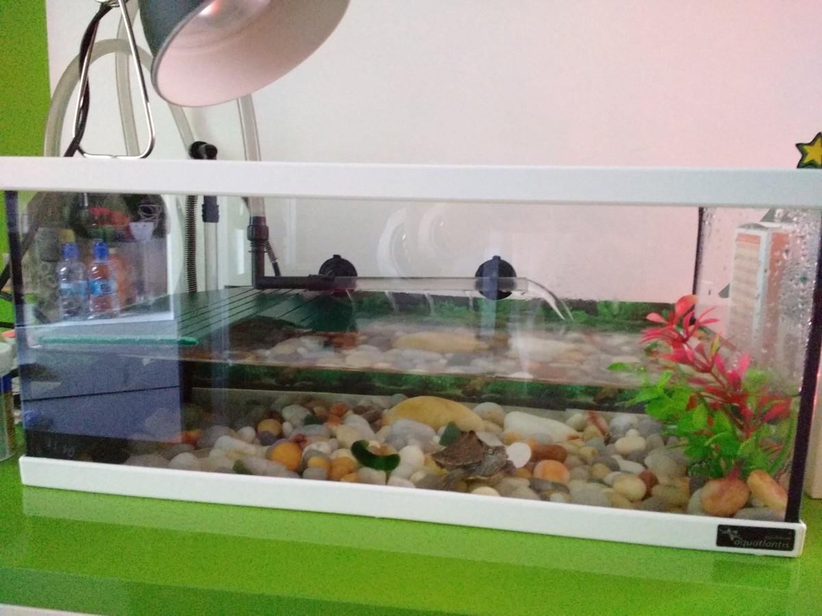 acuario tortum sin filtro blanco terrarios