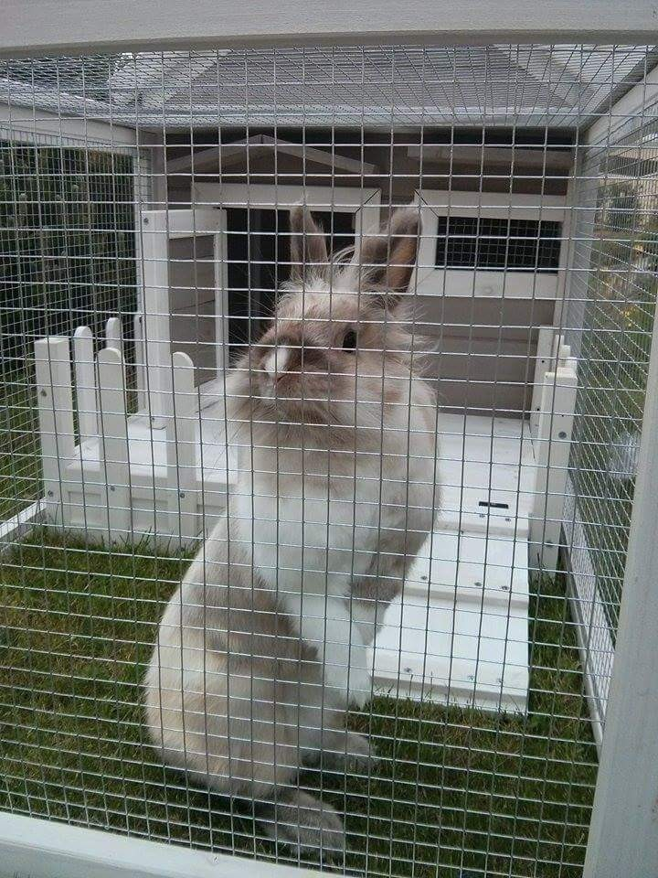 Conejera para roedores y conejos alora conejera for Abreuvoir lapin fait maison