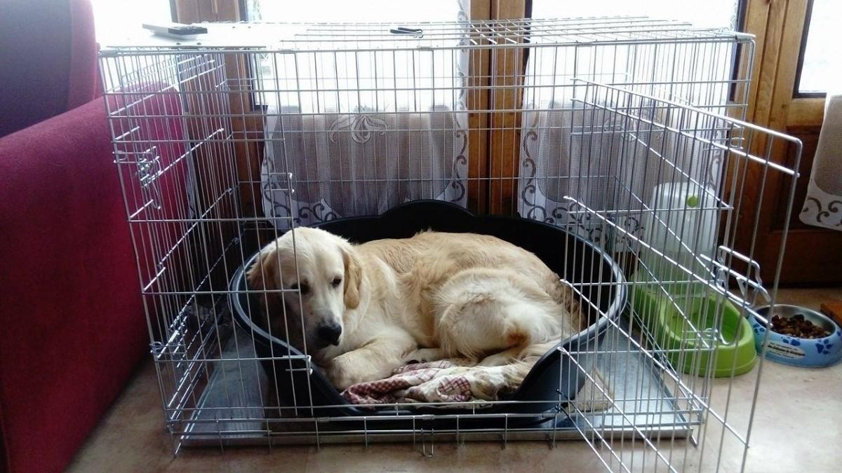 Jaula de transporte para perros Xena - Transportines